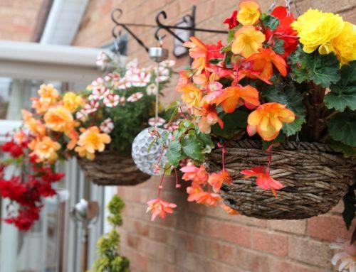 Nurturing Your Garden