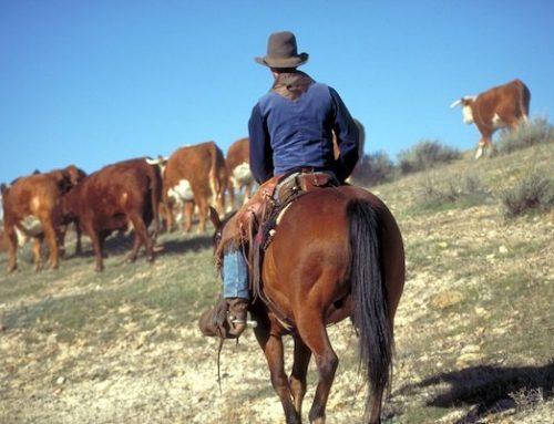 SupaLite Warning: Beware Cladover Cowboys